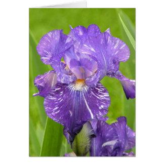 Purple Iris Note Card