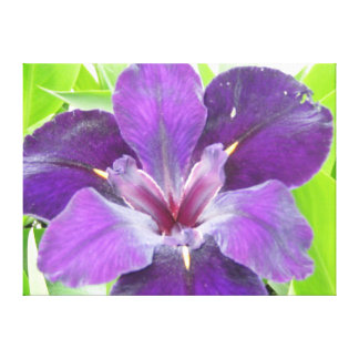 Purple Iris, pond side Canvas Print