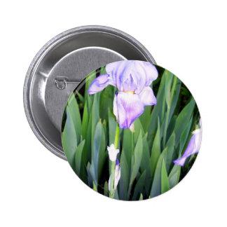 purple iris with the moring dew pin