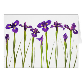 Purple Irises - Iris Flower Customized Template Card