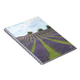 Purple lavender fields near Sault Notebook