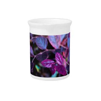 Purple leaves pitcher
