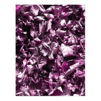 Purple leaves. postcard