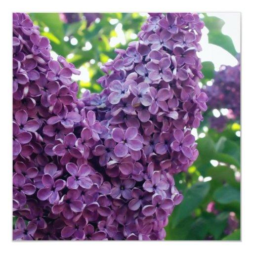 """Purple Lilacs Invitation 5.25"""" Square Invitation Card"""