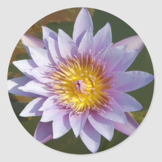 Purple Lotus Water Lily Round Sticker