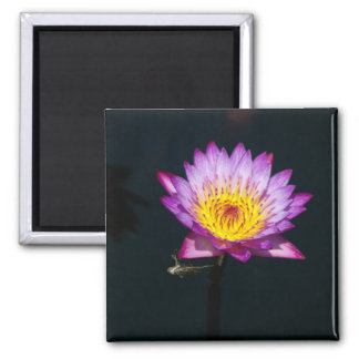Purple Lotus Waterlily Dragonfly Nymph magnet