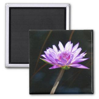 Purple Lotus Waterlily magnet