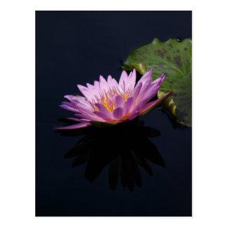 Purple Lotus Waterlily Postcard