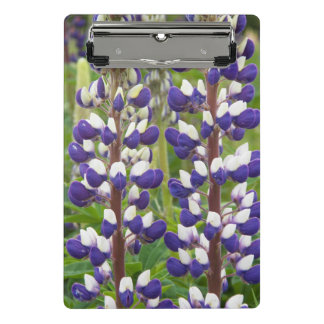 Purple Lupine Floral