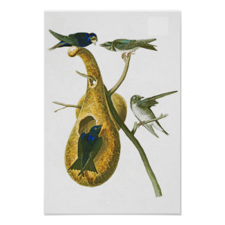 Purple Martin John James Audubon Birds of America Poster