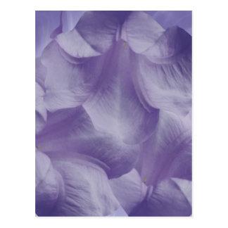 Purple Moon Flower Petals Postcard