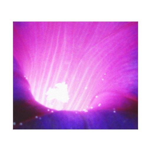 Purple Morning Glory Flower Canvas Print