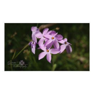 Purple Mountain Flowers Photograph