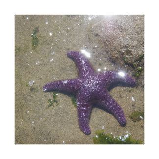 Purple Ochre Star - Canvas