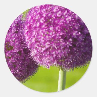 Purple Onion Flowers in Boston Public Garden Round Stickers