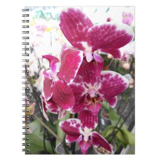 Purple Orchid Notebooks