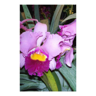 Purple Orchid Stationery Design