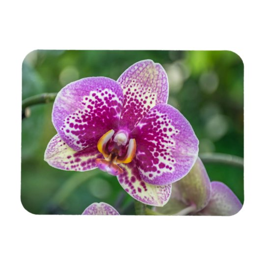 Purple orchid up close fridge magnet