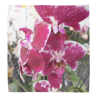 Purple Orchids Bandana