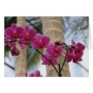 Purple Orchids Note Card
