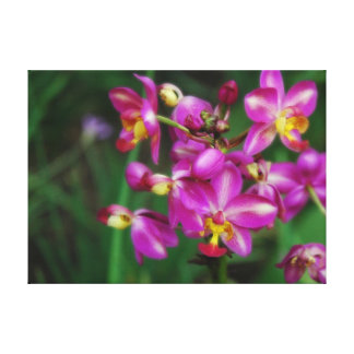Purple orchids Photo Canvas Print