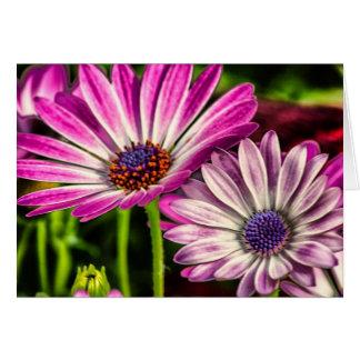 Purple Osteospermum Greeting Card