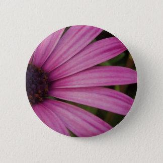 Purple Osteospurmum Button