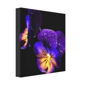Purple Pansies Flowers Black Modern Wall Art