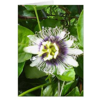 PURPLE PASSION FRUIT FLOWER CARD