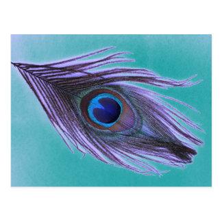 Purple Peacock Feather on Teal Postcard