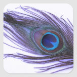 Purple Peacock Feather Square Stickers
