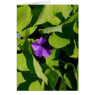 Purple Petunia Blank Greeting Card
