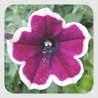 Purple Petunia Square Sticker