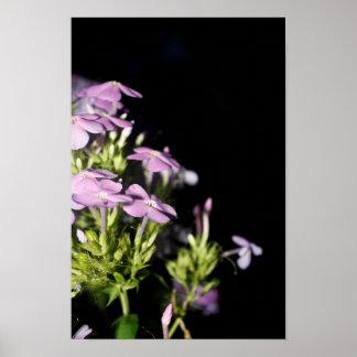 Purple Petunias At Night Poster
