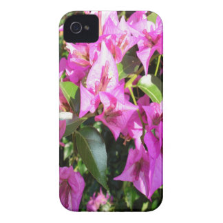 Purple Pink Bougainvillia In Blossom iPhone 4 Case-Mate Cases