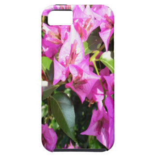 Purple Pink Bougainvillia In Blossom iPhone 5 Cases