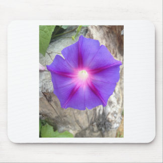 Purple Pink Morning Glory Bloom Mousepads