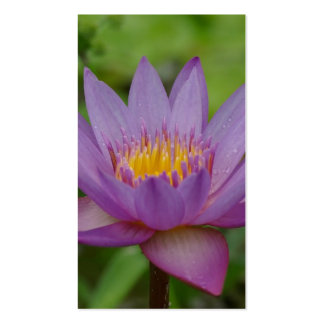 Purple Pink Water Lily Flower Business Card Template