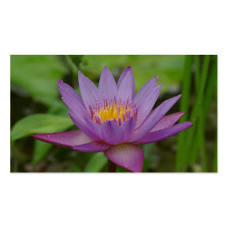 Purple Pink Water Lily Flower Business Cards