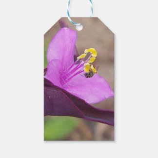 purple plant called spiderwort and a tiny bee gift tags