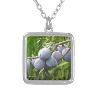 Purple plums hanging on the tree . Tuscany, Italy Silver Plated Necklace