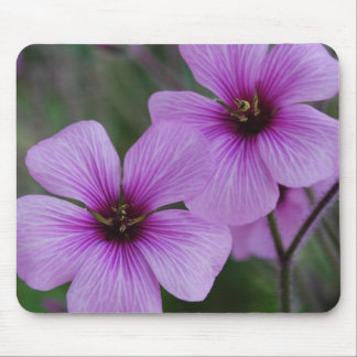 Purple Poppies Mouse Pad