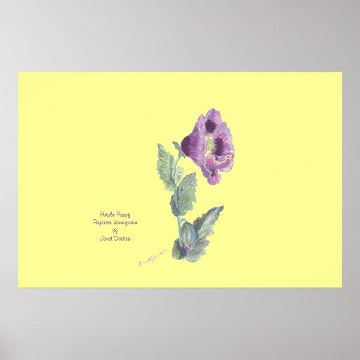 Purple Poppy, papaver somniferum by JDavies Posters