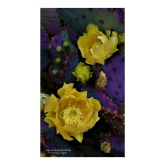 Purple prickly pear opuntia cactus yellow flowers poster
