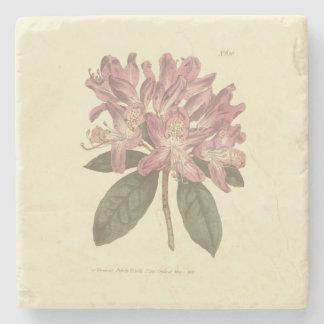 Purple Rhododendron Illustration Stone Coaster