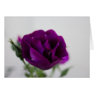 Purple rose greetings card (inc. envelope)