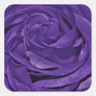 Purple Rose of Fibro Square Sticker