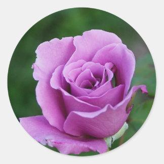 Purple Rose Round Sticker