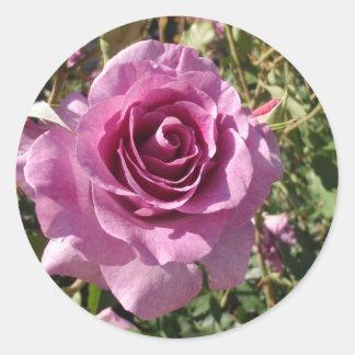 Purple Rose Stickers