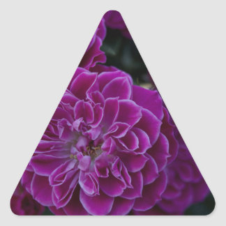 Purple Rose Triangle Sticker